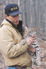DNR staff Bobcat